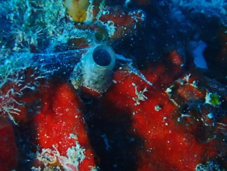 New species of 'Spider-Man' worm-snail discovered