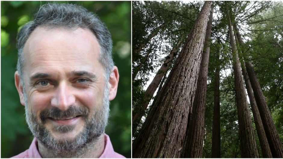 "Biologist David George Haskell studies the sounds of trees and wrote a book about his findings called ""The Songs of Trees."""