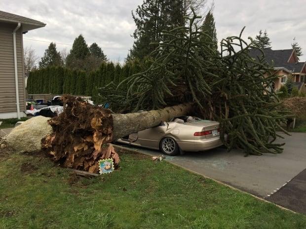 Surrey tree on car