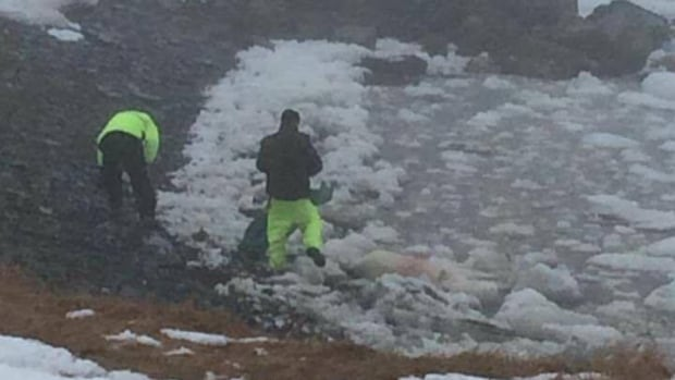 Conservation officers stand near the body of a dead polar bear on Saturday. The animal was shot after officers determined it posed a public safety risk to the nearby community.