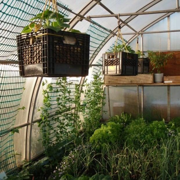 Kuujjuaq greenhouse hanging plants