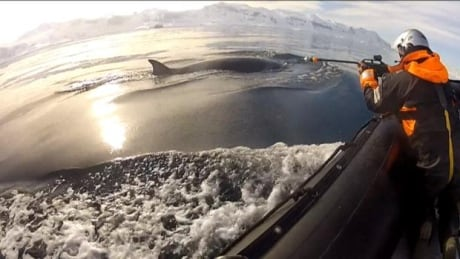 Whale tagging Antarctica