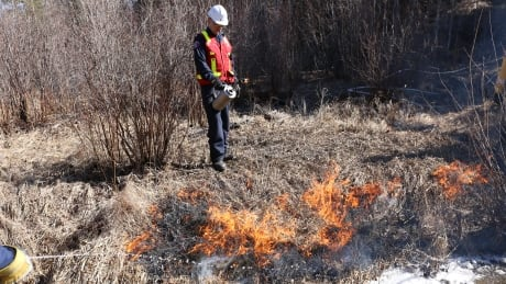 Pic 1 Controlled burns