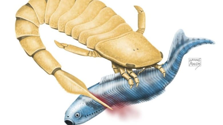 sea-scorpion.JPG