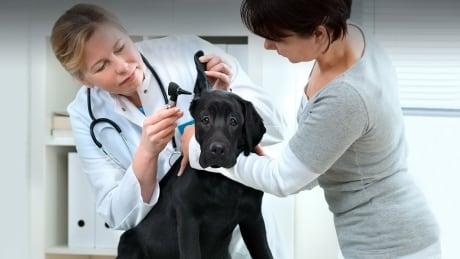 Ontario Veterinary College