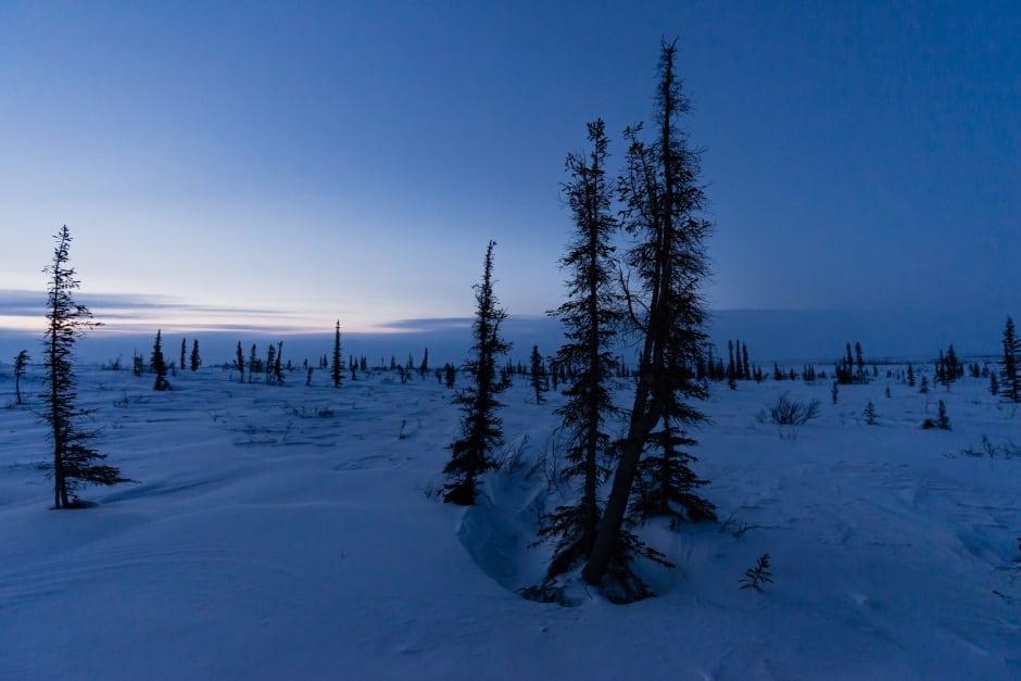 Arctic tree line