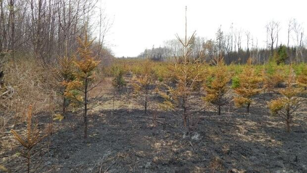 Many Maritimers still like to burn grass, believing incorrectly that it helps lawns grow in better in the spring, fire officials say.