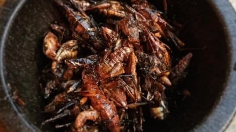 Seattle Mariners knock it out of the park with toasted grasshopper snack