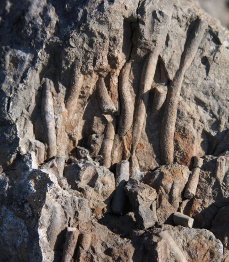 Ancient methane 'burp' points to climate change 110 million