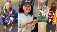 Pets brought to oilsands camps during the wildfire evacuation