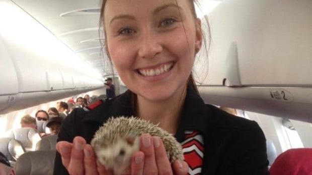 Hedgehog on plane