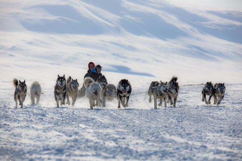 Nunavut Quest sled dog race takes off from Arctic Bay   CBC News