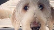 Cooper lost dog Hamilton