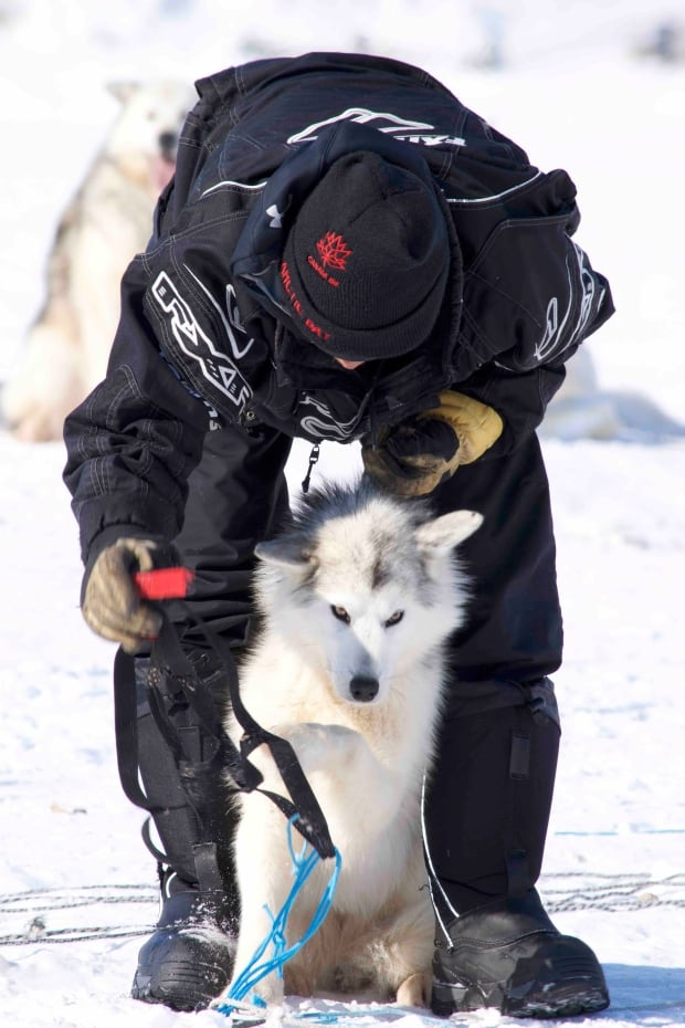 Nunavut Quest Dog and Musher