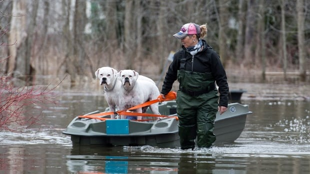 Hillary Porter pulls her dogs along in a boat in the town of Rigaud, Que., west of Montreal, on Thursday, following flooding in the area.