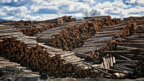 Political leaders vow to fight for B.C. forestry workers amid U.S. lumber dispute
