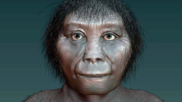 Homo floresiensis got its 'hobbit' nickname because of its small stature. It stood at an average of three feet and six inches in height.