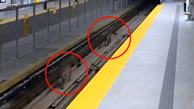 The pair tripped the SkyTrain alarm system just after 4 a.m. Friday.