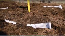 Soil your undies