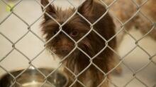 BC SPCA Dogs seized