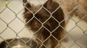 Dogs found in 'horrific living conditions' seized by B.C. SPCA