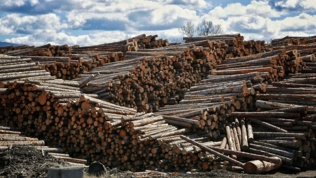 Forty to fifty percent of all soft wood lumber produced in Alberta is sent to the United States