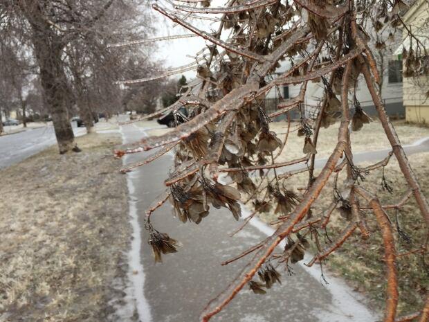Ice storm -tree