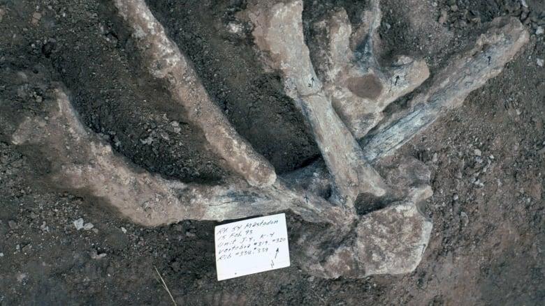 Mastadon and humans North America
