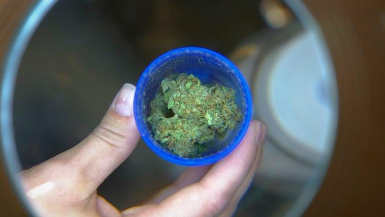 Medical marijuana magnifying glass
