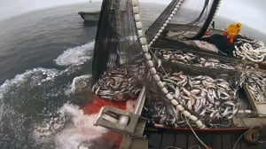 A third of global fishing goes unreported, UBC researchers find