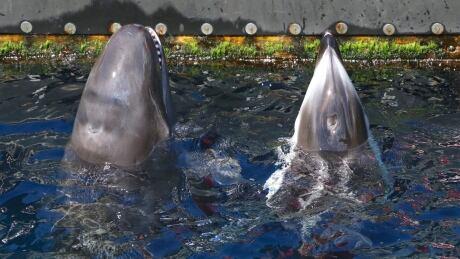 Cetacean ban