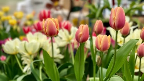Unseasonably cold weather puts a damper on flower industry