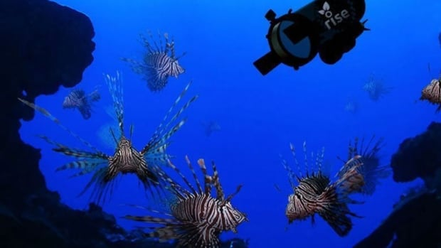In this artist rendering provided by Robots in Service of the Environment, a new robot that hunts the dangerous and invasive lionfish made its debut in Bermuda in April. It stuns lionfish with an electric current and then the fish is vacuumed into a container alive and it can later be sold for food. The robot caught 15 lionfish in 48 hours of initial testing. Handout photo courtesy of Robots In Service of the Environment.