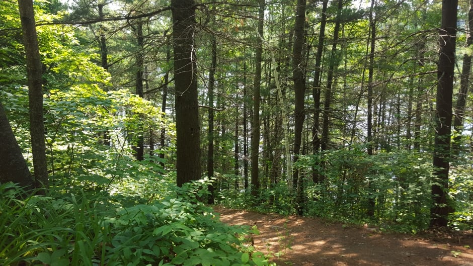 Just 20 minutes in a forest can improve your blood pressure, your cortisol levels, your mood and creativity.