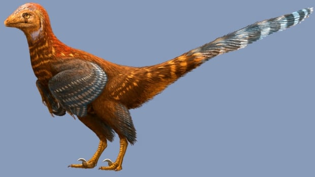 An artist's rendering of the feathered troodontid Jianianhualong tengi.