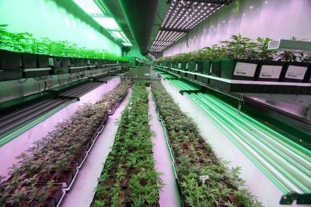 Organigram marijuana farm