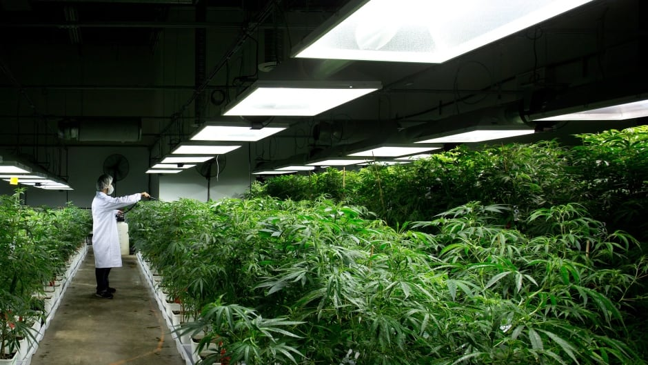 Marijuana plants need a lot of water, and indoor growing operations consume a lot of electricity