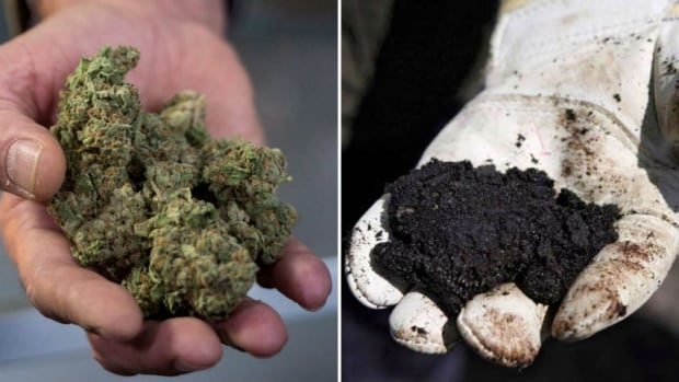 Marijuana oilsands