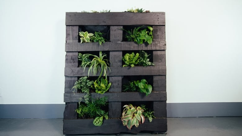 Take Your Succulent And Potted Plant Obsession To A Whole New Level With A  Living Wall! Ideal For Urbanites, Apartment Dwellers Or Anyone Looking To  Infuse ...