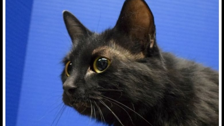 Regina Humane Society offers cats for a purr-fect price