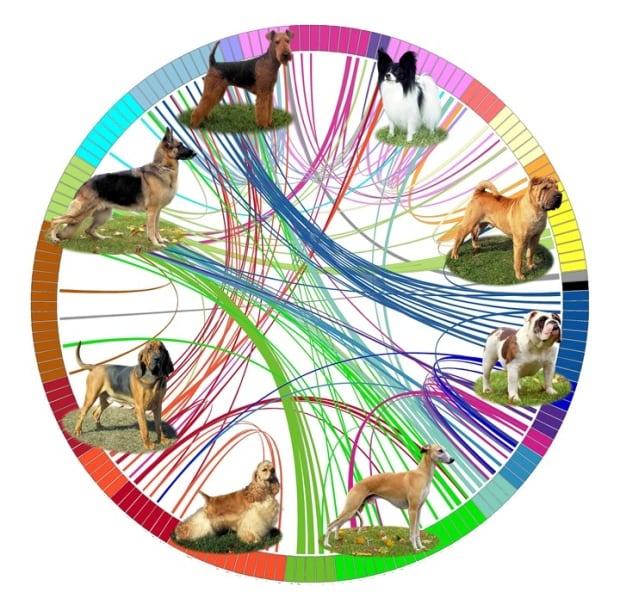genetic analysis of dog breeds