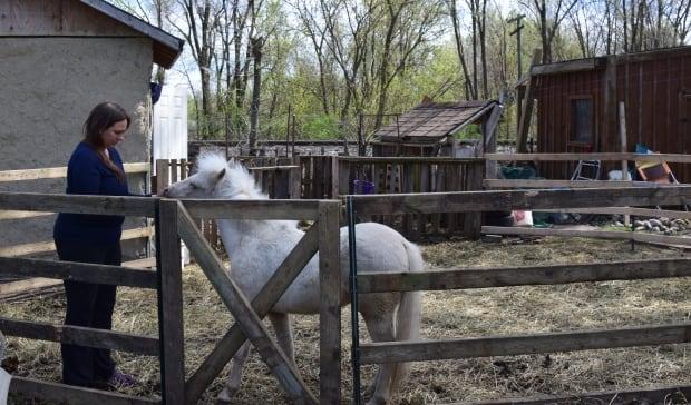 Amy Lalonde Guelph Therapy Pony Odin