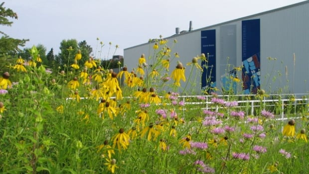 This rain garden, on Misty Crescent in Kitchener, is full of native flowers with deep root systems that channel water down into the soil.