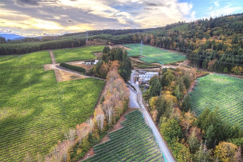 All you can drink: This Vancouver vineyard is for sale   CBC