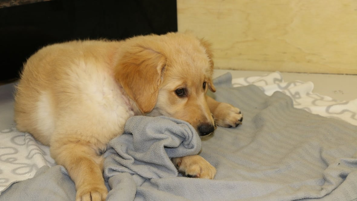 Craigslist ad entices dog lovers with 'free' rent ...