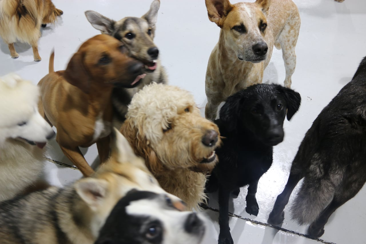 Craigslist ad entices dog lovers with 'free' rent | CBC News