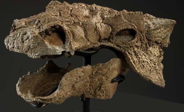 Skull of Zuul crurivastator