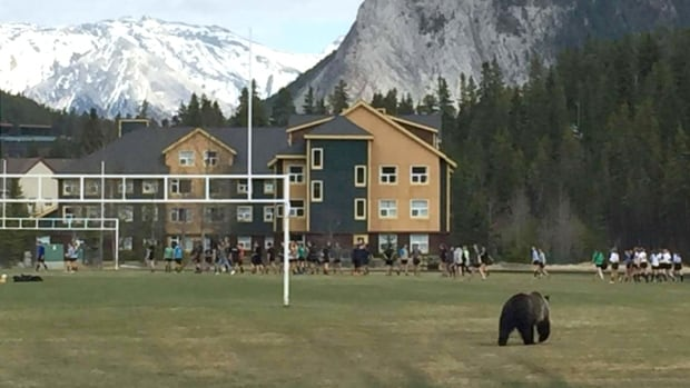 Lee Garrett, an assistant coach with the high school girls rugby team in Banff, took this photo of a grizzly that paid a friendly visit to their practice.