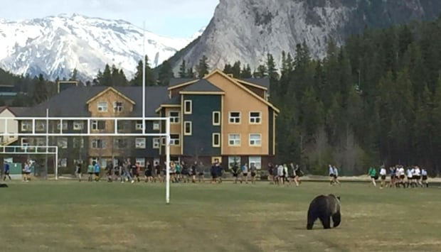 Banff bears rugby