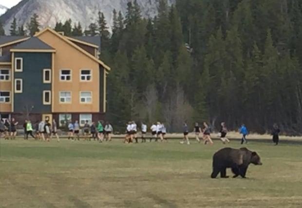 Bear Banff Rugby